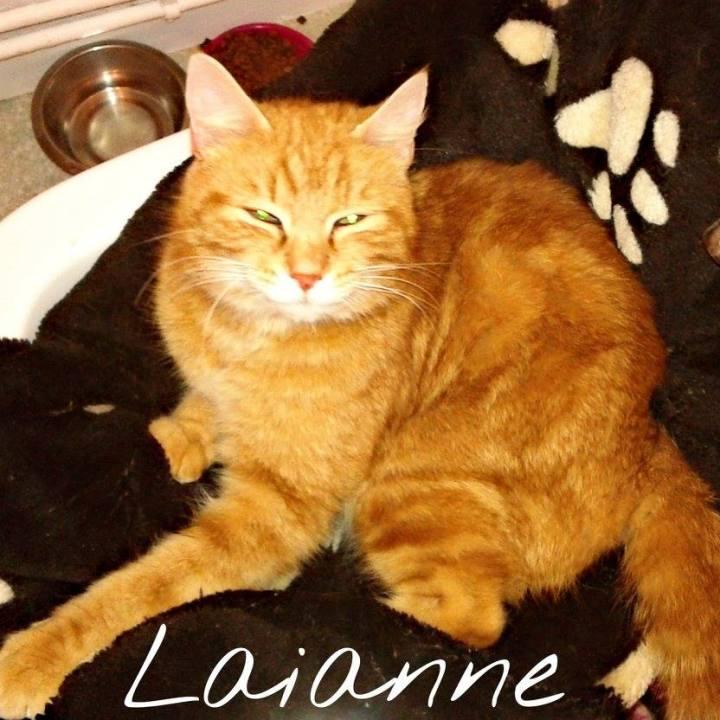 Laianne, jeune chatte trouvée avec ses petits.
