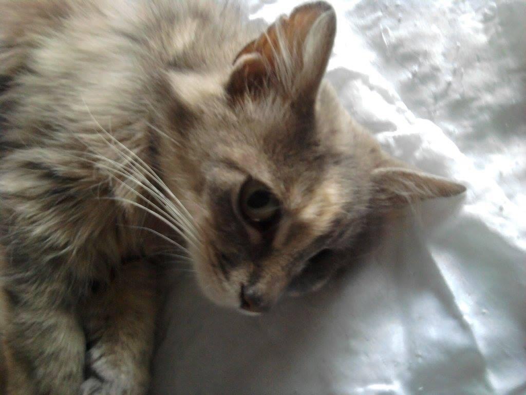 Jeune chatte douce pics