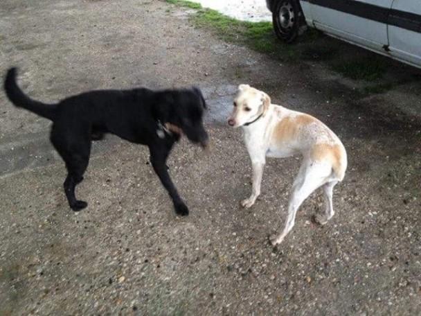 je viens d'être sauvée, et même un peu timide je veux bien jouer avec d'autres chiens