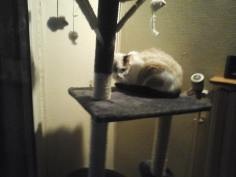 Louison sur un arbre perchée
