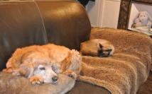 Et oui, Livio est ok chiens ;) Par contre pas certain qu'il reste de la place pour les humains ^^