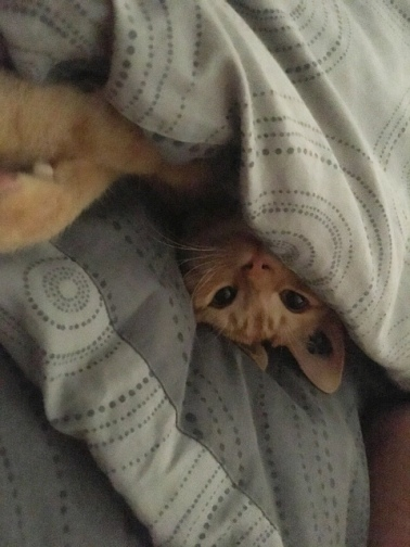 Dans le lit