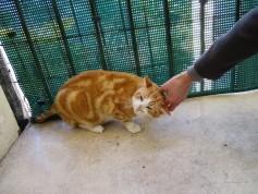 Dieu a inventé le chat pour que l'homme ait un tigre à caresser chez lui. (Victor Hugo)