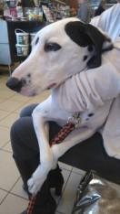 et oui, Liza sait se faire toute légère pour un câlin :)