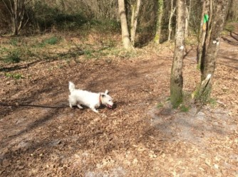 Joyce dans les bois