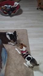 Salut copain chien :)
