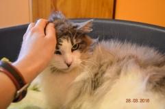 Elle est sympathique l'humaine mais là elle détruit mon brushing ;)