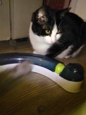 Admirez le style : la balle assortie à mes yeux ;) un beau vert :)