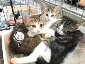 Moïsette, Mulan (adoptée) et Marcel à la journée d'adoption du 25 juin 2016