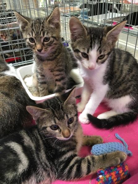 les chatons à la journée d'adoption du 25 juin