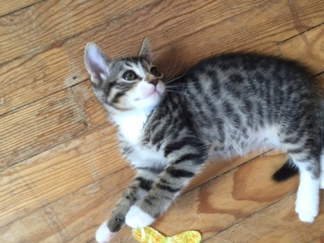 les chatons de Mia - juillet 2016- 11