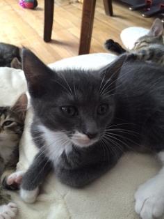 les chatons de Mia - juillet 2016- 2