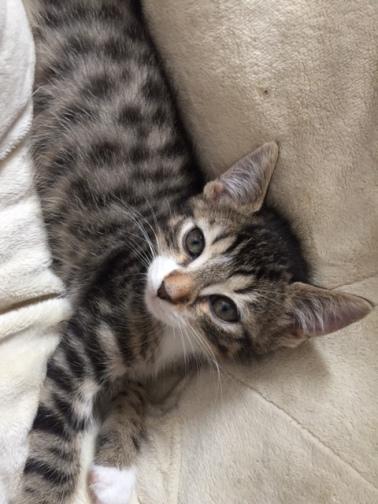 les chatons de Mia - juillet 2016- 3