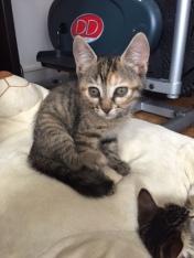 les chatons de Mia - juillet 2016- 5