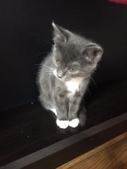 les chatons de Mia - juillet 2016- 6