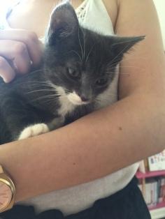 les chatons de Mia - juillet 2016- 8
