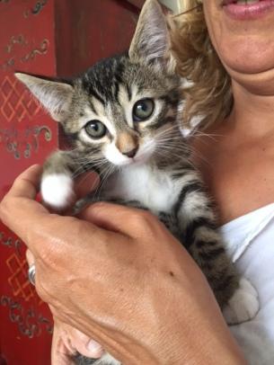 les chatons de Mia - juillet 2016- 9