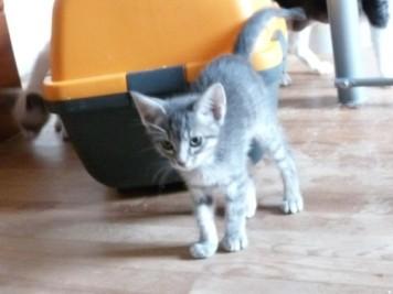 Mowglie