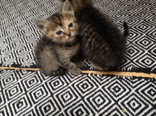 Les chatons de Mia