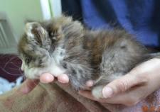 sauvetage chaton
