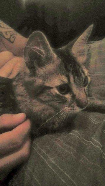 Miaouss adopté 1