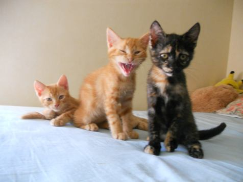 Miette, Mistigrif et Miel