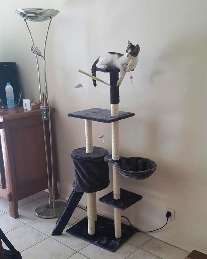 Chic un immense arbre à chat rien que pour moi !!