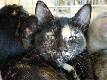 Mumu (adopté à la journée d'adoption du 6 aout 2016)