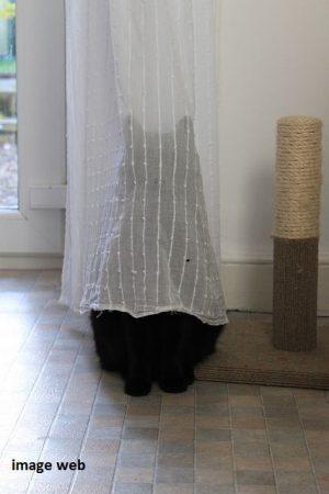 14_chat noir derrière rideau