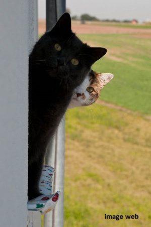 15_black cat curieux