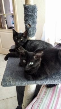 Mozel (noir) et Miko (cendré)