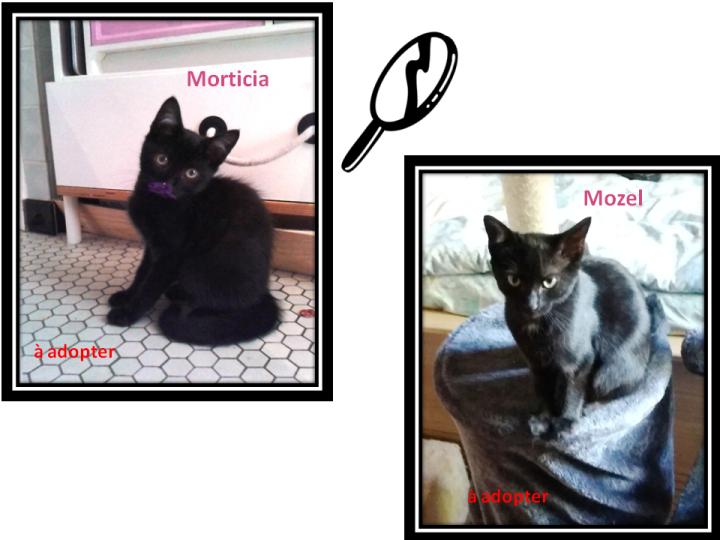 28-29_Morticia et Mozel