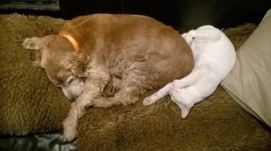 Manoa et Stanley à la sieste !