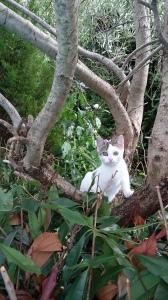 Mattie dans l'olivier de sa nounou