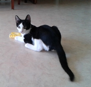 Mïou et le paquet de Kleenex