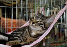 Mowgli - JA du 20-08-2016