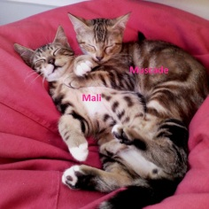 Muscade et Mali