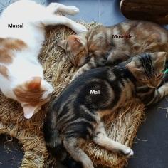 Muscade_Massaï_Mali bis