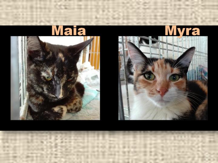 maia-et-myra