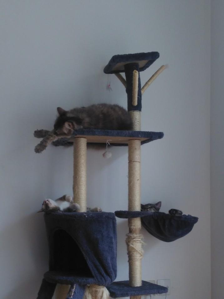 Makila (à gauche) et Minesker (à droite)(Minette de la FA en haut)