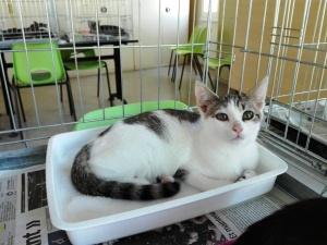 mandarine-adoptee-02_ja-23-09-16