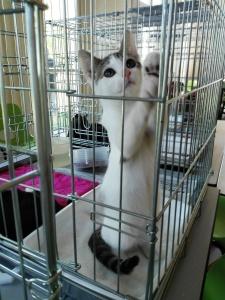 mandarine-adoptee-04_ja-23-09-16