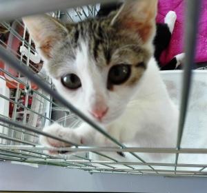 mandarine-adoptee-06_ja-23-09-16