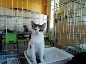 mandarine-adoptee-07_ja-23-09-16-copie