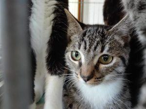 mimi-adopte-01_ja-23-09-16