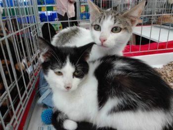 Minnie et son frère, Mentos