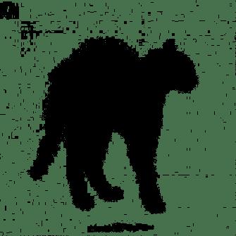 chat-noir-effraye