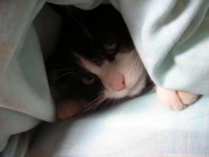 chat-sous-la-couette