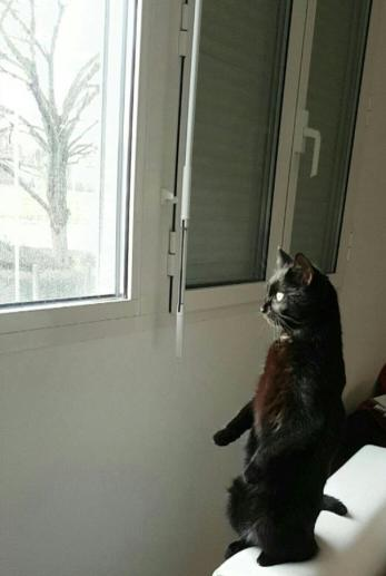 Xena à la fenêtre