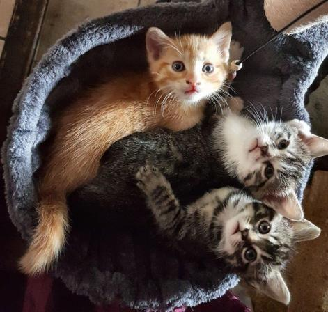 Chatons Astakhoff 20 avril 2017